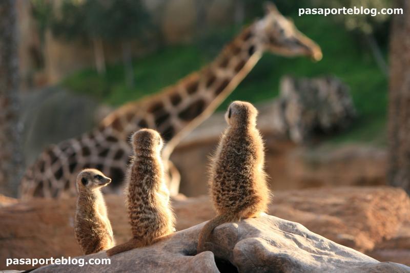 Animales en el zoo de Valencia