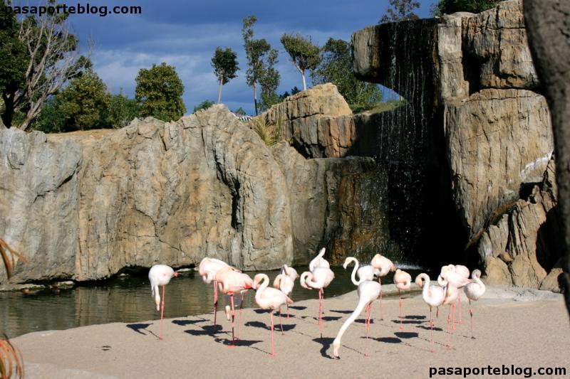 Flamencos en el zoo valencia