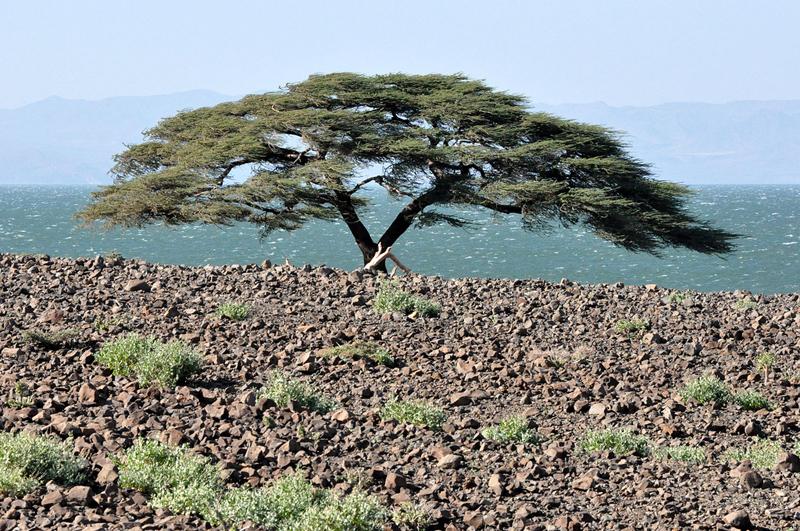 Lago Turkana (Kenia), salvaje y peligroso. Los 10 lagos más espectaculares del mundo