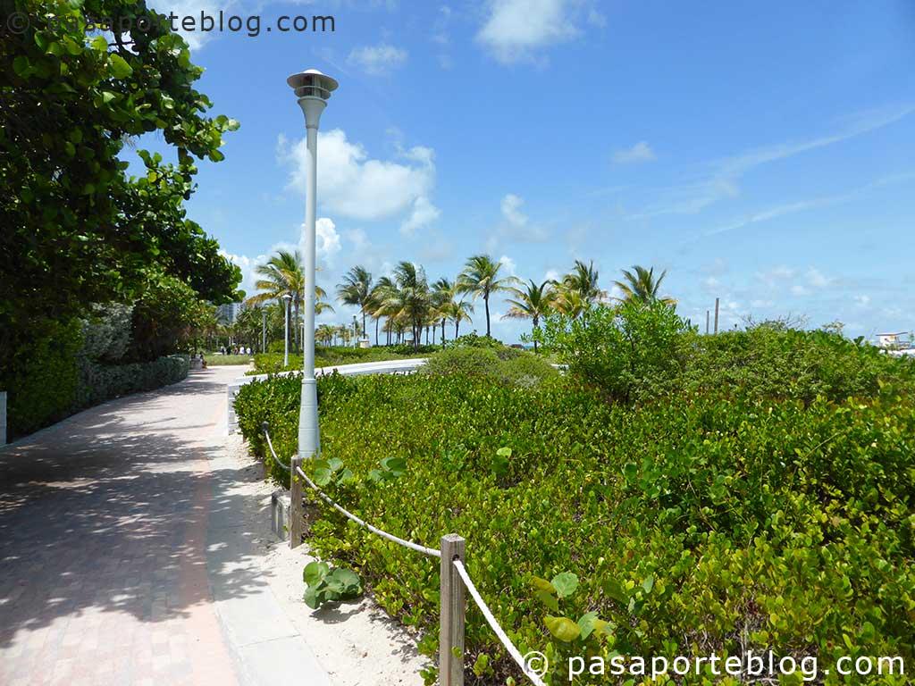 paseo junto a south beach, con patinadoras y musculistas