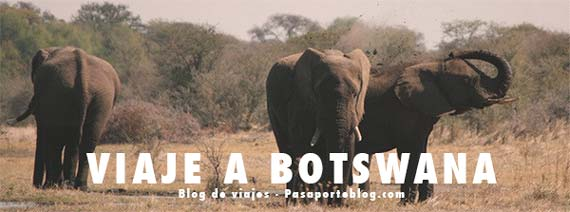 botswana blog de viajes