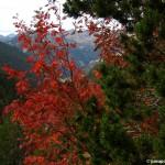 Gradientes climáticos y fotografías de otoño, Pirineos