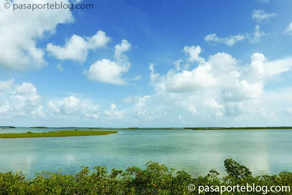 manglares en los cayos de florida que visitar en miami en 10 dias