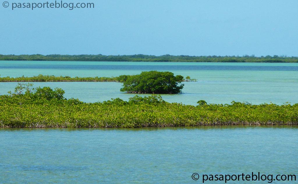 manglares ruta n-coche-a-los-cayos-de-florida viajes