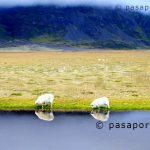 Descubriendo el Sur de Islandia en nuestro blog de viajes