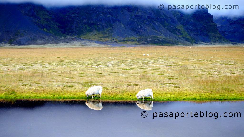 blog sur de islandia