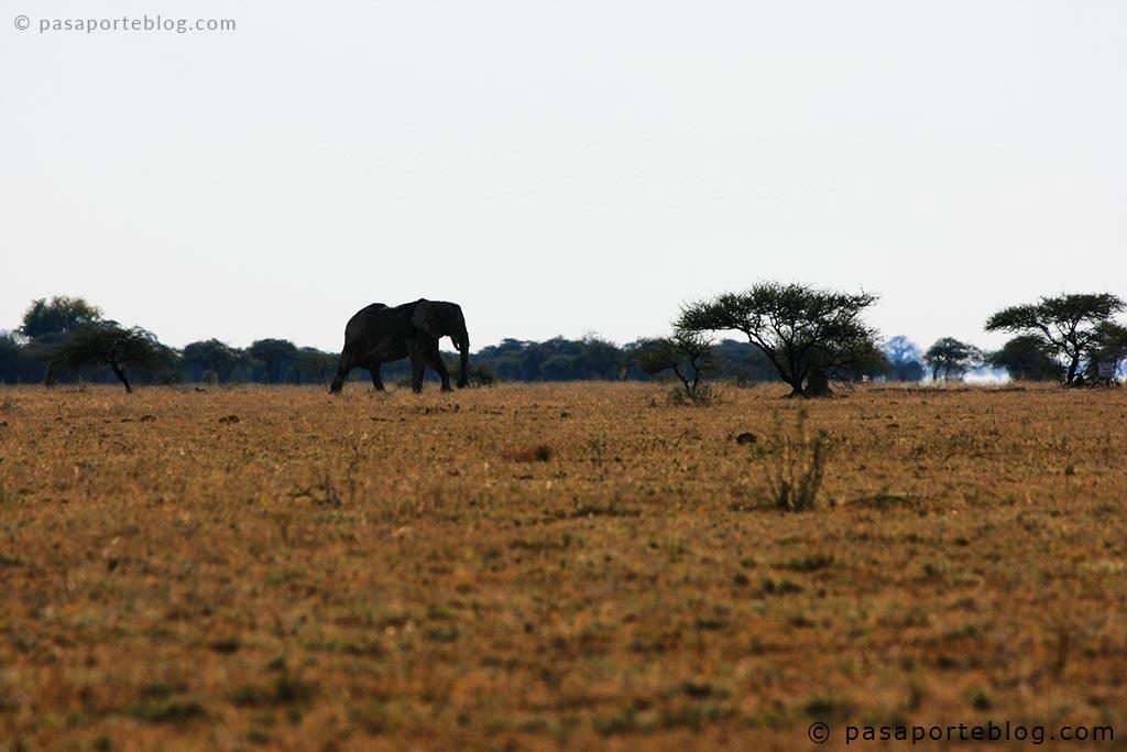 elefantes en la parte alta de moremi viaje a botswana