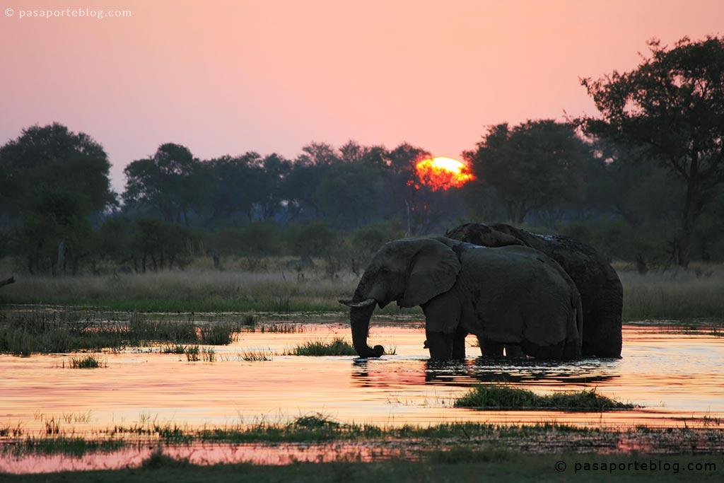 elefantes en el delta del okavango moremi foto hd
